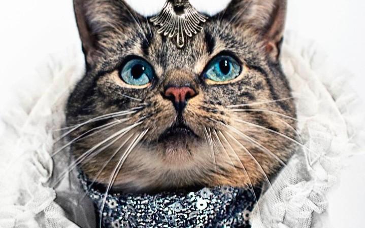 glamorous cats