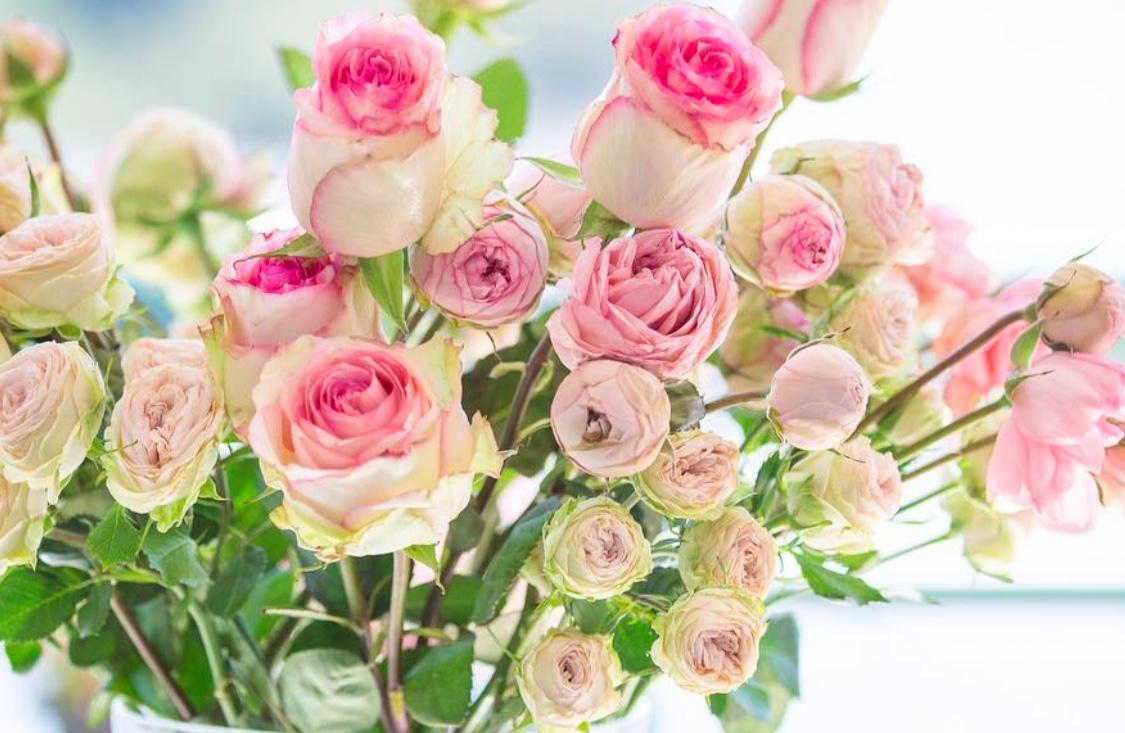 All The Pretty Flowers October 22 2018 Zsazsa Bellagio Like No